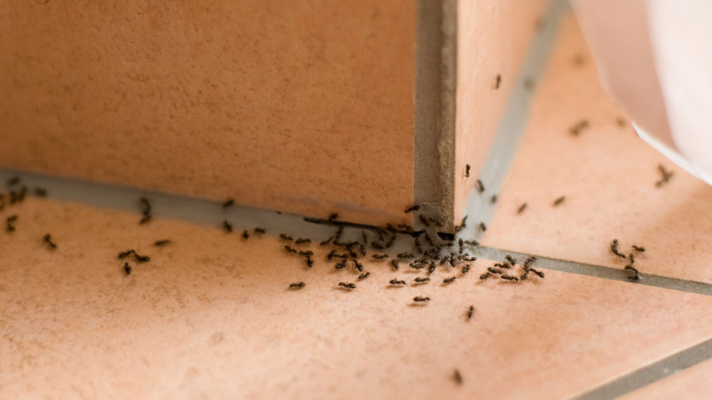 Insects spread over a floor.