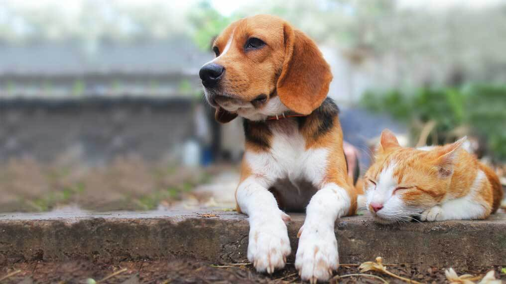 A dog and cat relax on a brick wall.