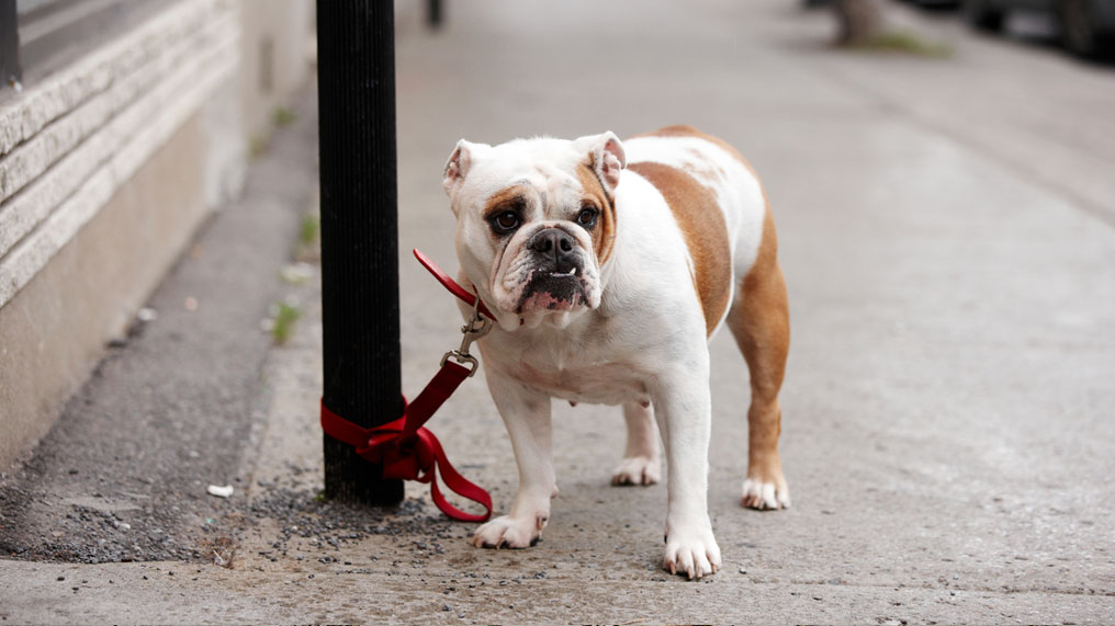A dog is tied up to a post.