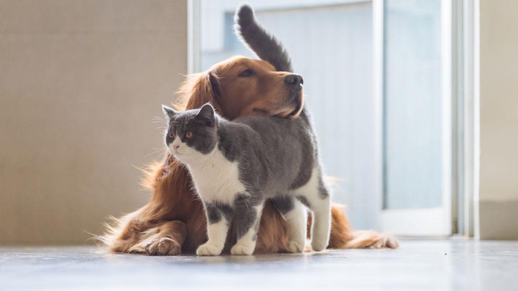 A dog cuddles a cat.