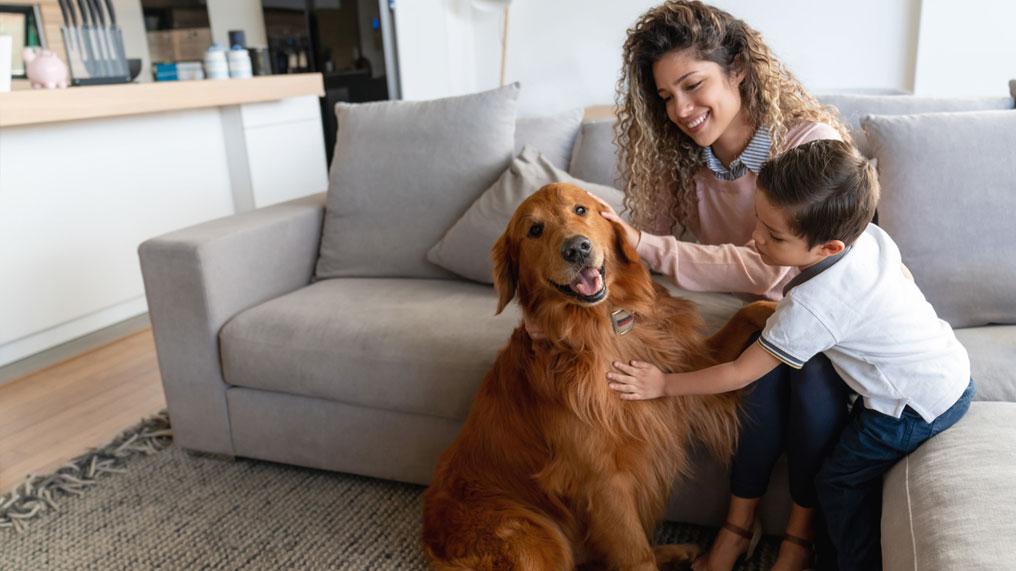 A mum and child pet a dog.