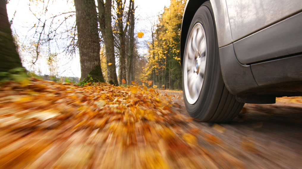 a car drives through the autumn leaves