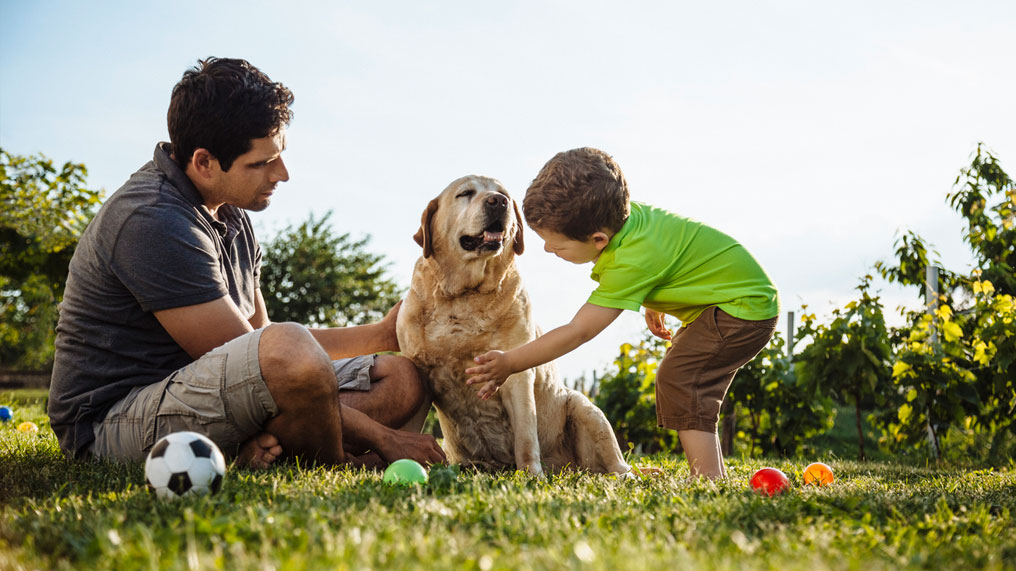 A family plays with their dog.
