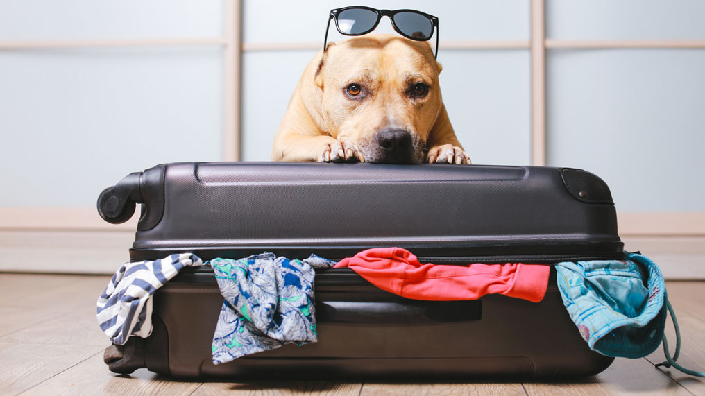 A dog wearing sunglasses closes a suitcase.