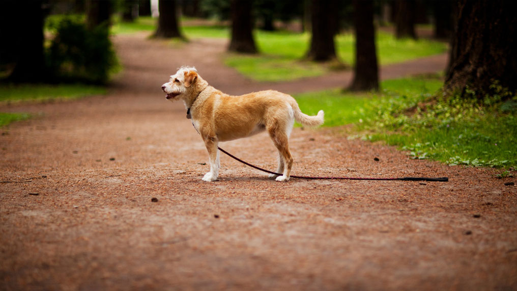 A dog in a park with no one holding its lead.