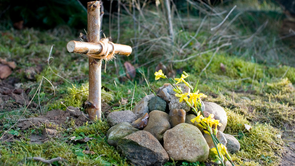 A pet gravestone.