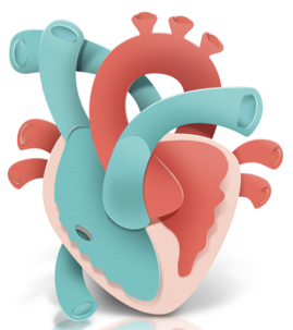A stylised graphic of a heart