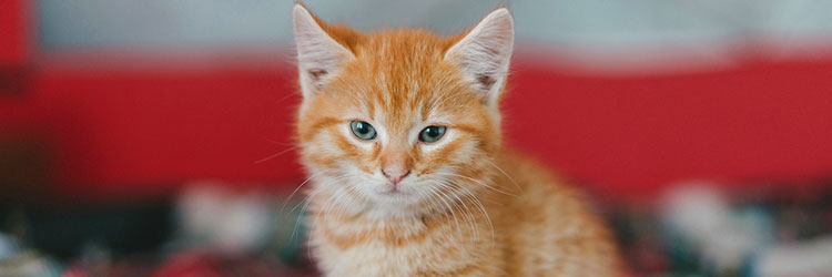 Ginger kitten sitting on a bed